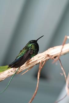 Un oiseau dans le bois