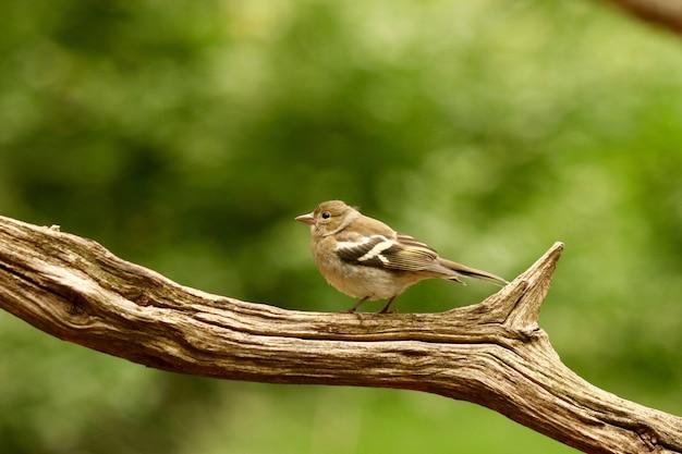 Oiseau dans une branche