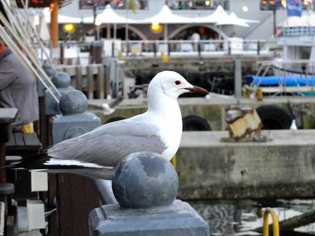 L'oiseau dans le café, le front de mer à cape town, afrique du sud
