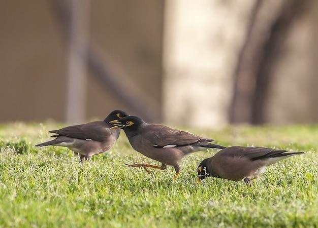Un oiseau dans l'herbe