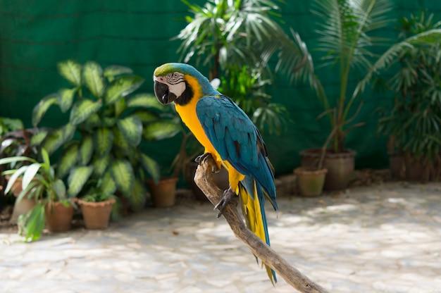 Oiseau dans jardin