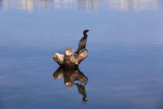Oiseau dans la lagune rodrigo de freitas à rio de janeiro, brésil