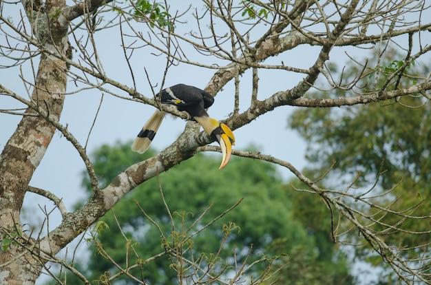 Oiseau dans la nature, calao posé sur une branche