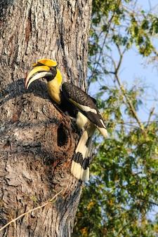 Oiseau dans la nature