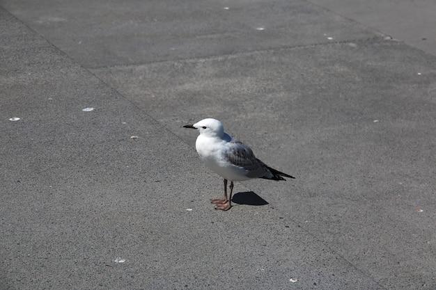 Oiseau dans la ville d'auckland en nouvelle-zélande