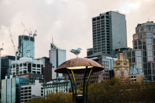 Oiseau dans la ville