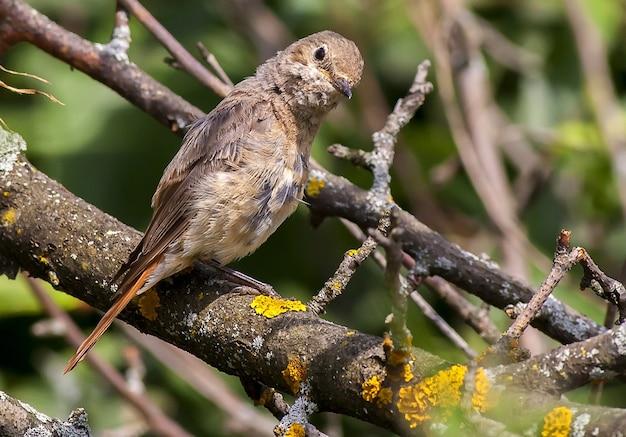 Un oiseau est assis sur une branche