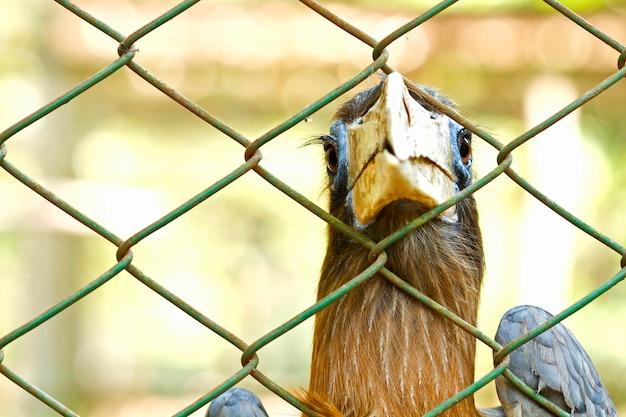 L'oiseau est attrapé et emprisonné dans une cage