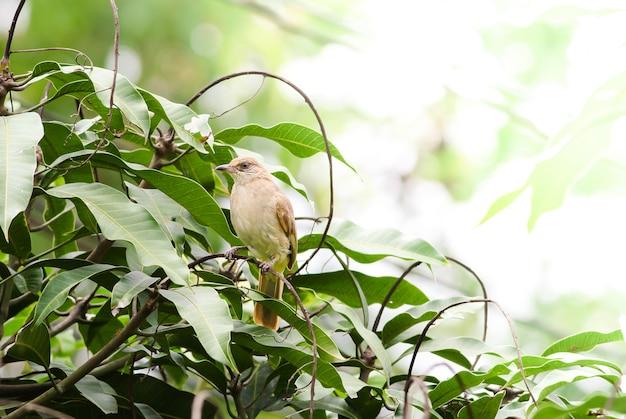 L'oiseau est dans la nature,
