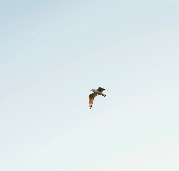 Oiseau à faible angle dans le ciel