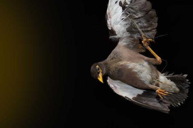 Oiseau sur fond sombre