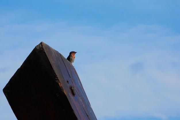 Un oiseau d'hirondelle sur un ciel bleu.