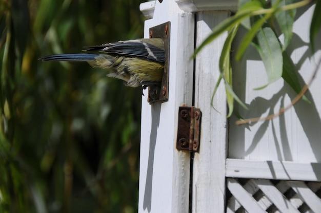 Oiseau sur une maison d'oiseau