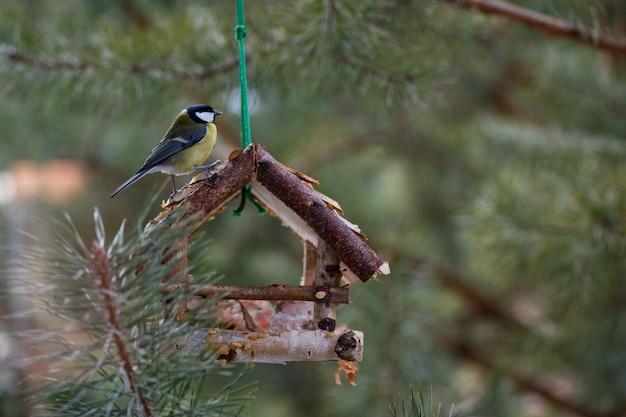 L'oiseau mange de la mangeoire. l'oiseau mange de la graisse en hiver. l'oiseau mange du pain blanc.