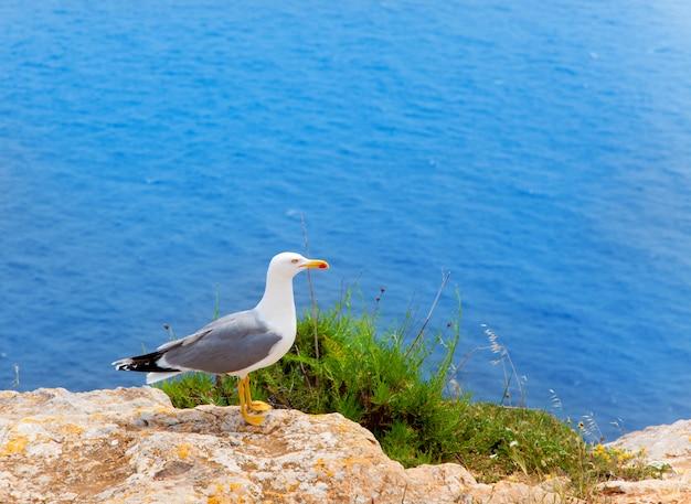 Oiseau de mer sur la mer méditerranée dans les îles baléares