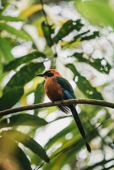 Un oiseau motmot roux dans une branche