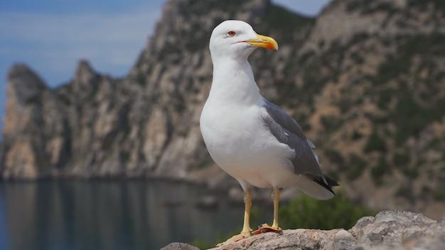 Oiseau mouette drôle debout sur le bord de la mer se bouchent.