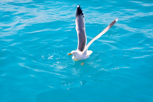 Oiseau mouette sur l'eau de mer dans l'océan