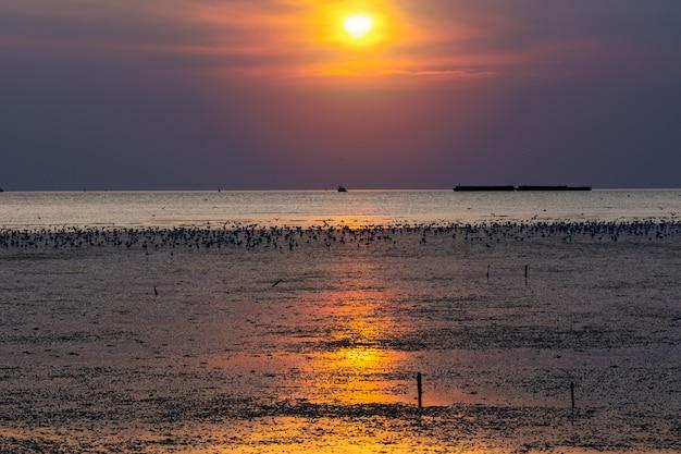 Oiseau mouette sur le paysage marin de la plage