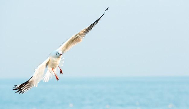 Un oiseau de mouette tournant tout en volant sur une mer bleue floue et ciel clair