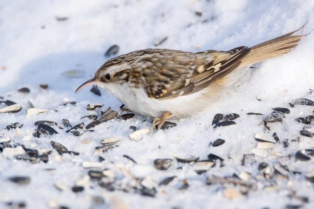 Oiseau sur la neige blanche