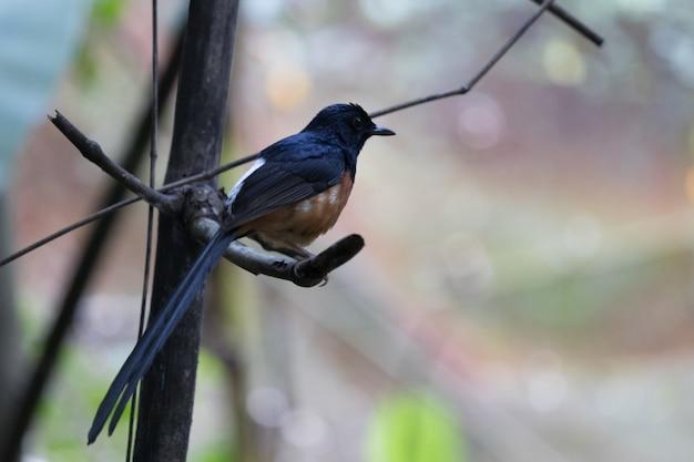 Oiseau noir sur la branche.