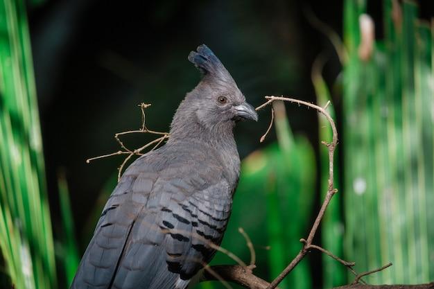 Oiseau noir avec une crête dans la jungle verte