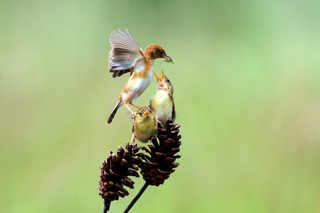 Oiseau nourrissant ses petits