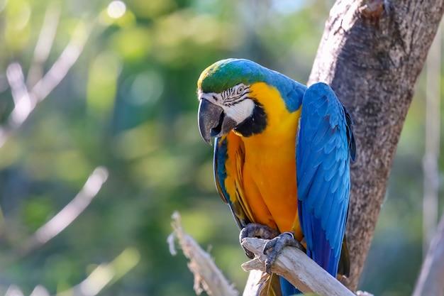 Oiseau perroquet ara bleu et jaune dans le jardin