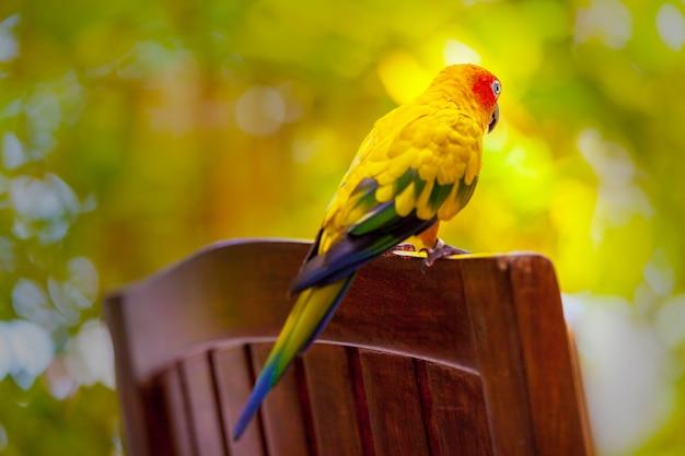 Oiseau perroquet aux maldives gros plan