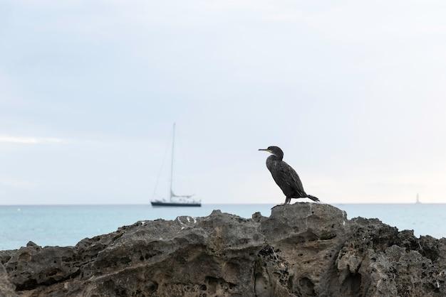 Oiseau sur une pierre avec la mer et un voilier