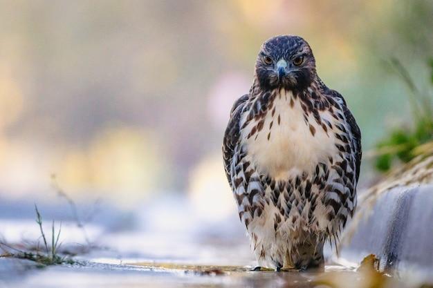 Oiseau posé sur le sol