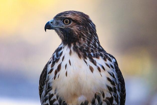 Oiseau de près