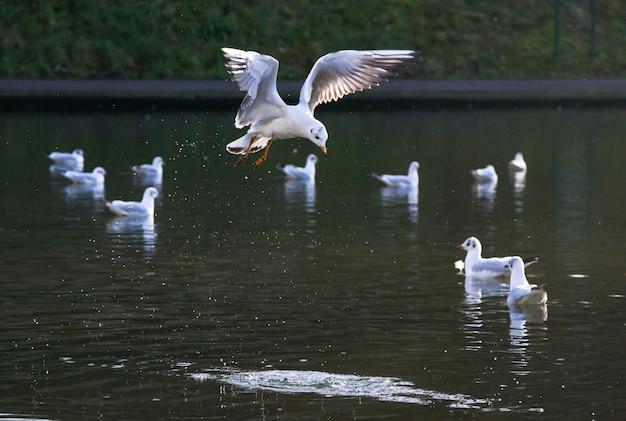 Oiseau qui décolle dans un lac