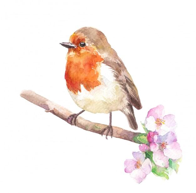 Oiseau robin redbreast sur la branche de fleur de cerisier