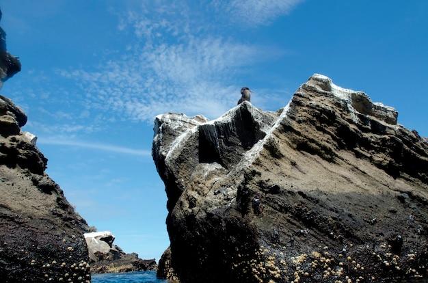 Oiseau sur un rocher, tagus cove, île isabela, îles galapagos, équateur