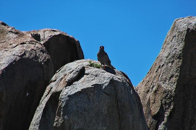 Oiseau en safari au kenya et en tanzanie, en afrique