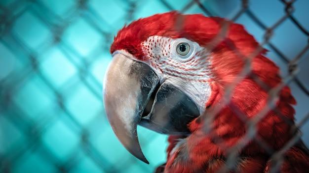 Oiseau sauvage rouge et vert