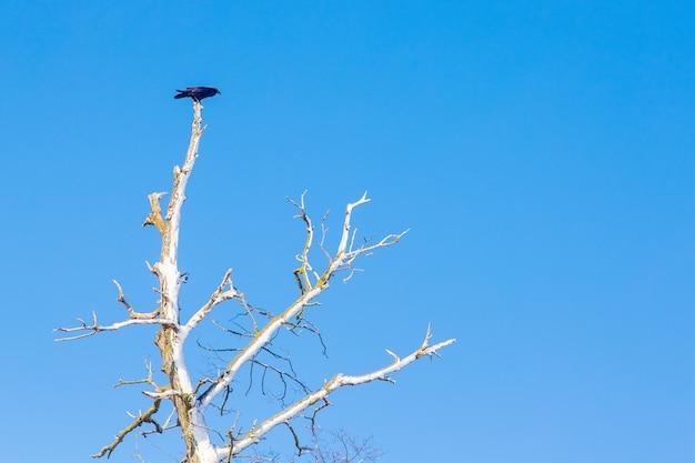 Un oiseau solitaire est assis sur une branche sèche d'un arbre contre un ciel bleu