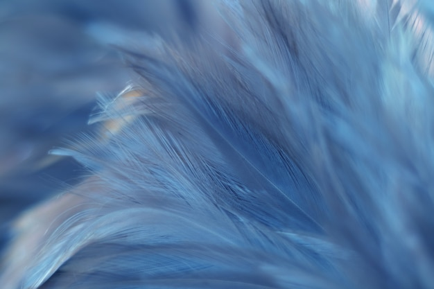 Oiseau, texture de plume de poulet pour le fond