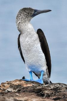 Oiseau tropical en milieu naturel
