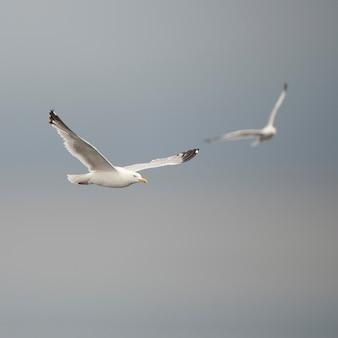 Oiseau en vol au lac des bois, ontario
