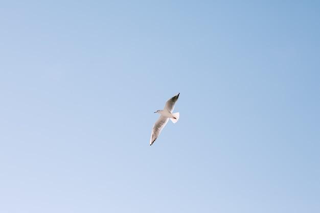 Un oiseau en vol dans un ciel bleu clair