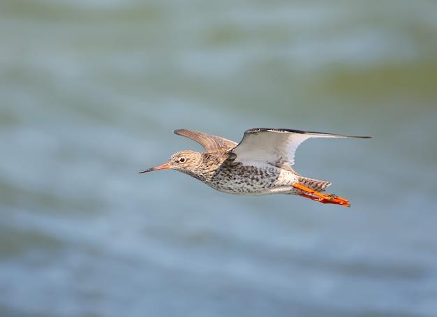 Un oiseau en vol
