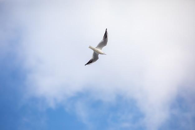 Oiseau volant seagull ciel isolé symbole de la liberté concept