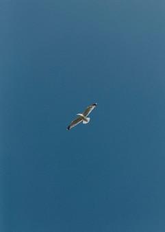 Oiseau volant sous le ciel bleu fond d'écran de téléphone portable