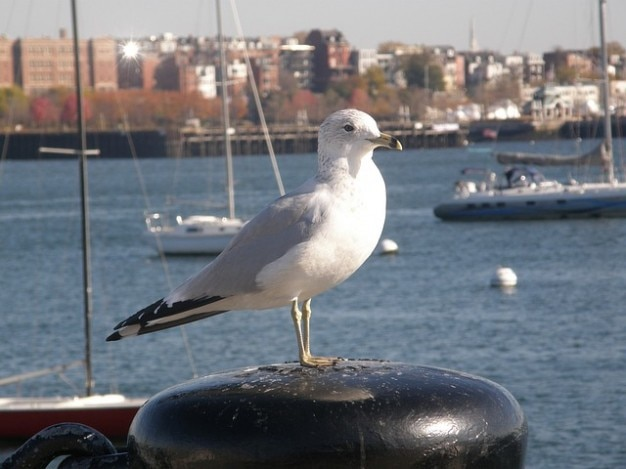 Oiseau yachts port de la ville souche arrêt bouées assis