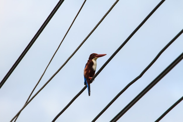 Oiseaux assis sur des lignes électriques au ciel dégagé