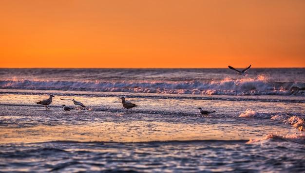 Oiseaux au bord de l'océan. côte de l'océan atlantique près de new york dans le domaine de rockaway park