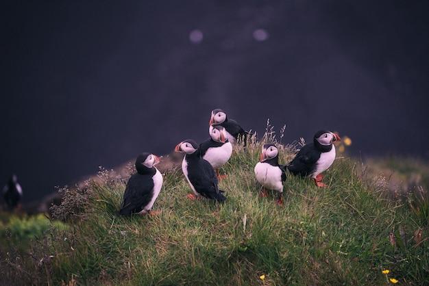 Oiseaux blancs et noirs près d'un plan d'eau